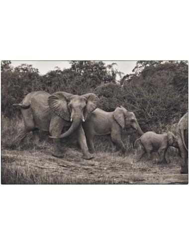 Elephant family, février 2020